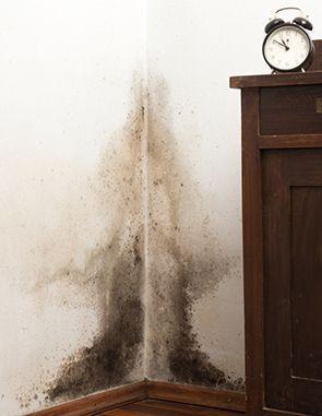 schimmel an der wand schimmel entfernen pinterest. Black Bedroom Furniture Sets. Home Design Ideas
