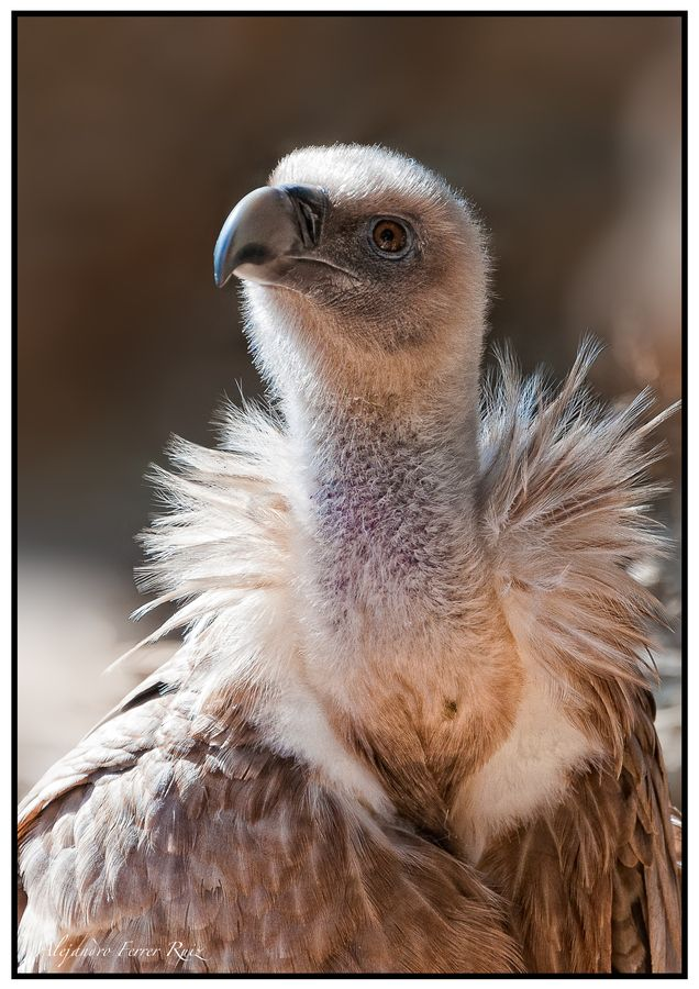 Is This A Baby Vulture