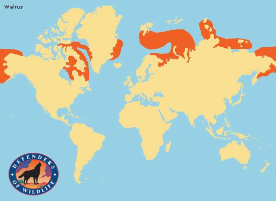 Range Map The Walrus Is Circumpolar In Its Range But They Are Found In Geographically Separate Areas Description From Pinterest Com Ajk Favorites Animal