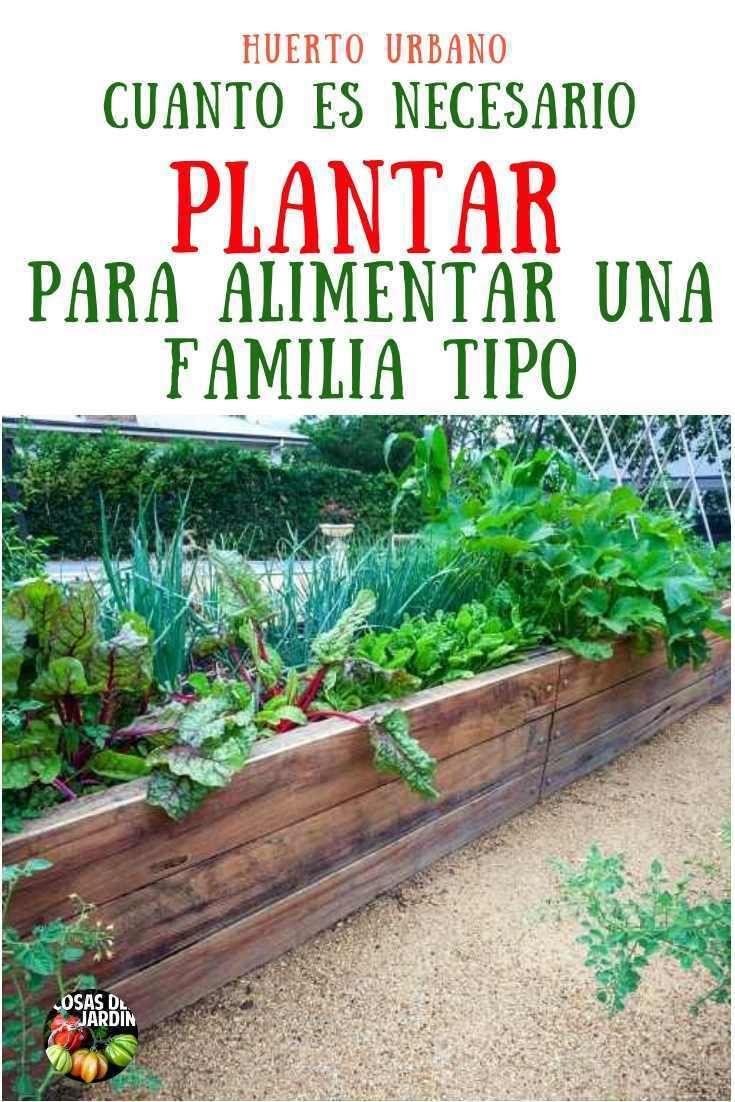 Cuánto se necesita plantar en un huerto para alimentar una familia tipo
