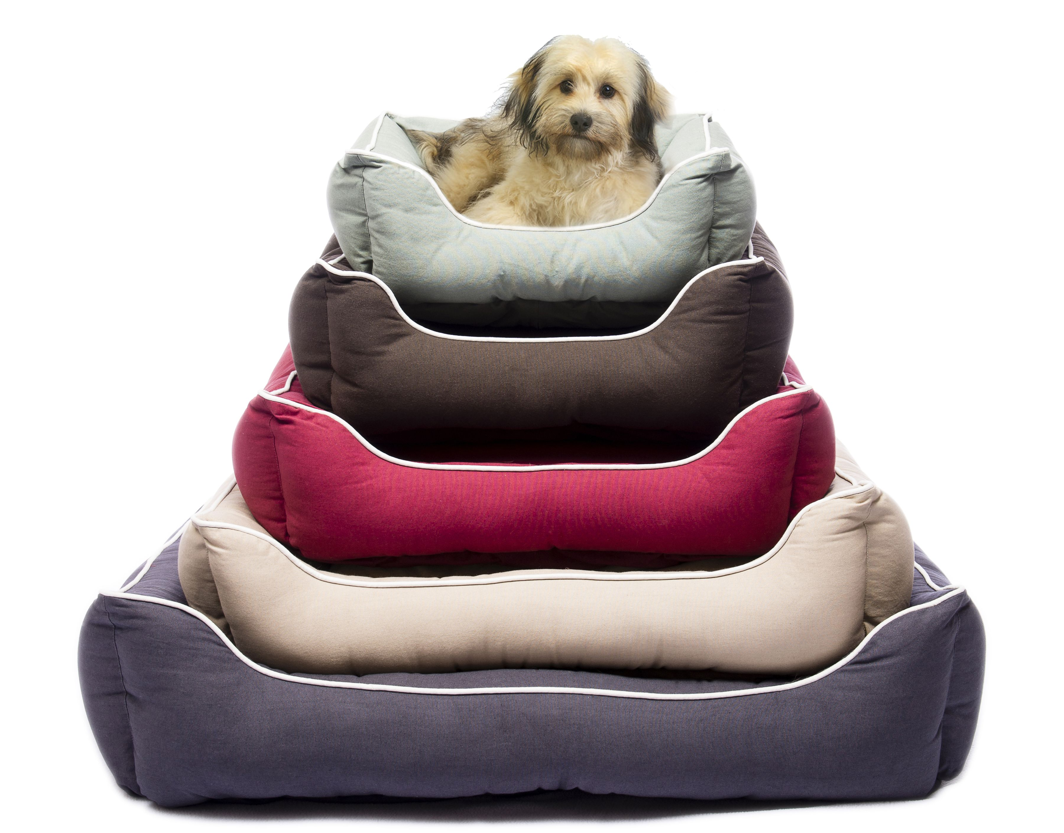 memory foam layer cover large orthopedic product big dual pet dog bed extra removable pillow