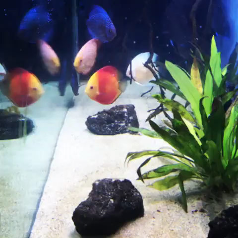 All credit to @newengland.aquarist on instagram as the owner of this video.