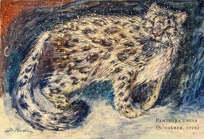 Panthera uncia - Dariya