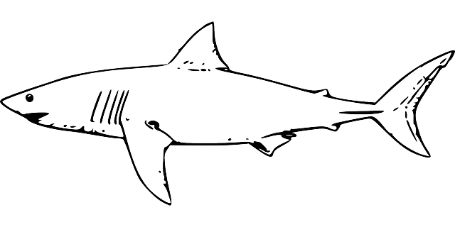 Free Image On Pixabay Shark Fish Great White Shark Shark Coloring Pages Shark Drawing Shark Pictures