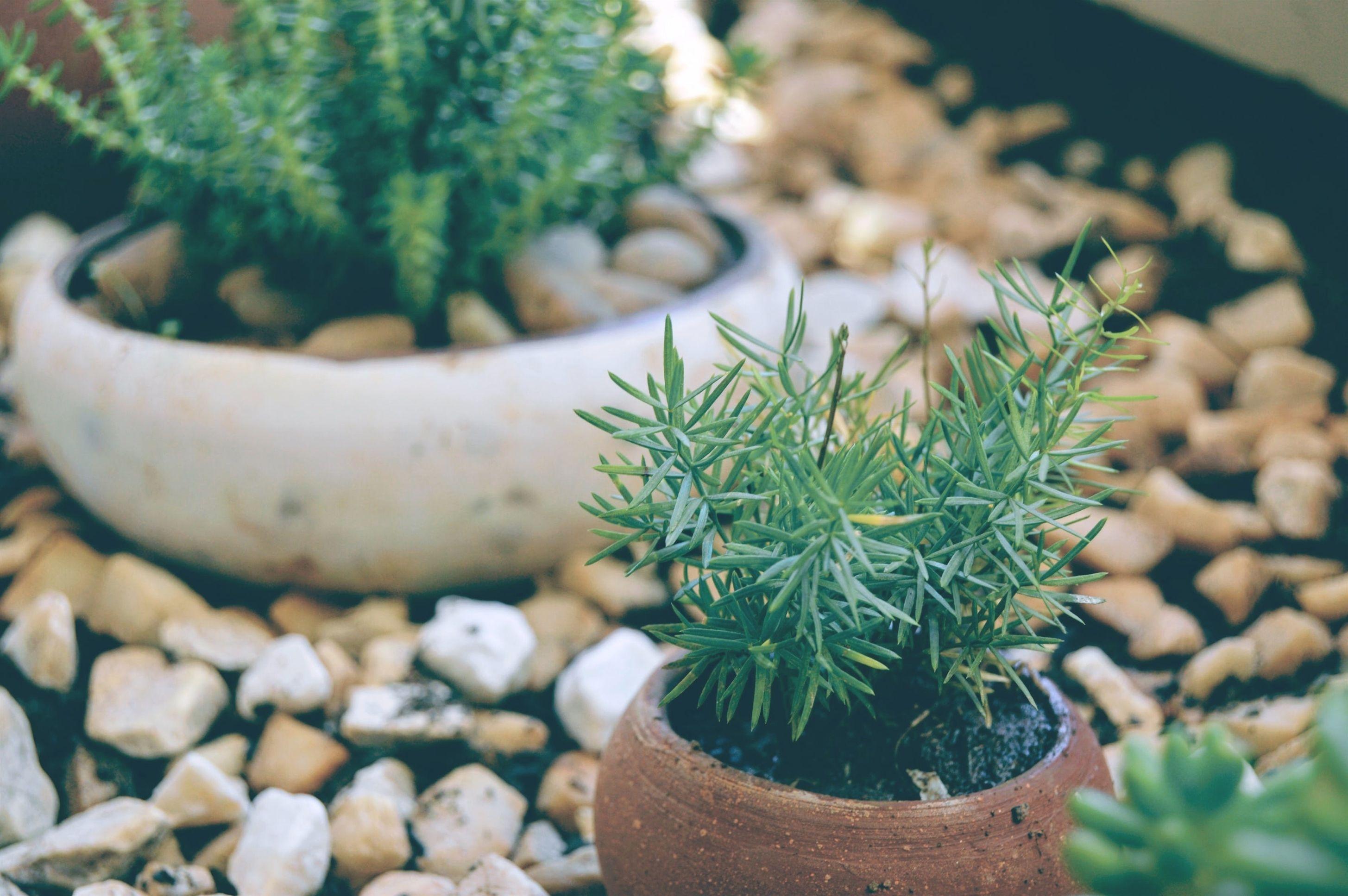inexpensive gardening gift basket ideas for women_5758