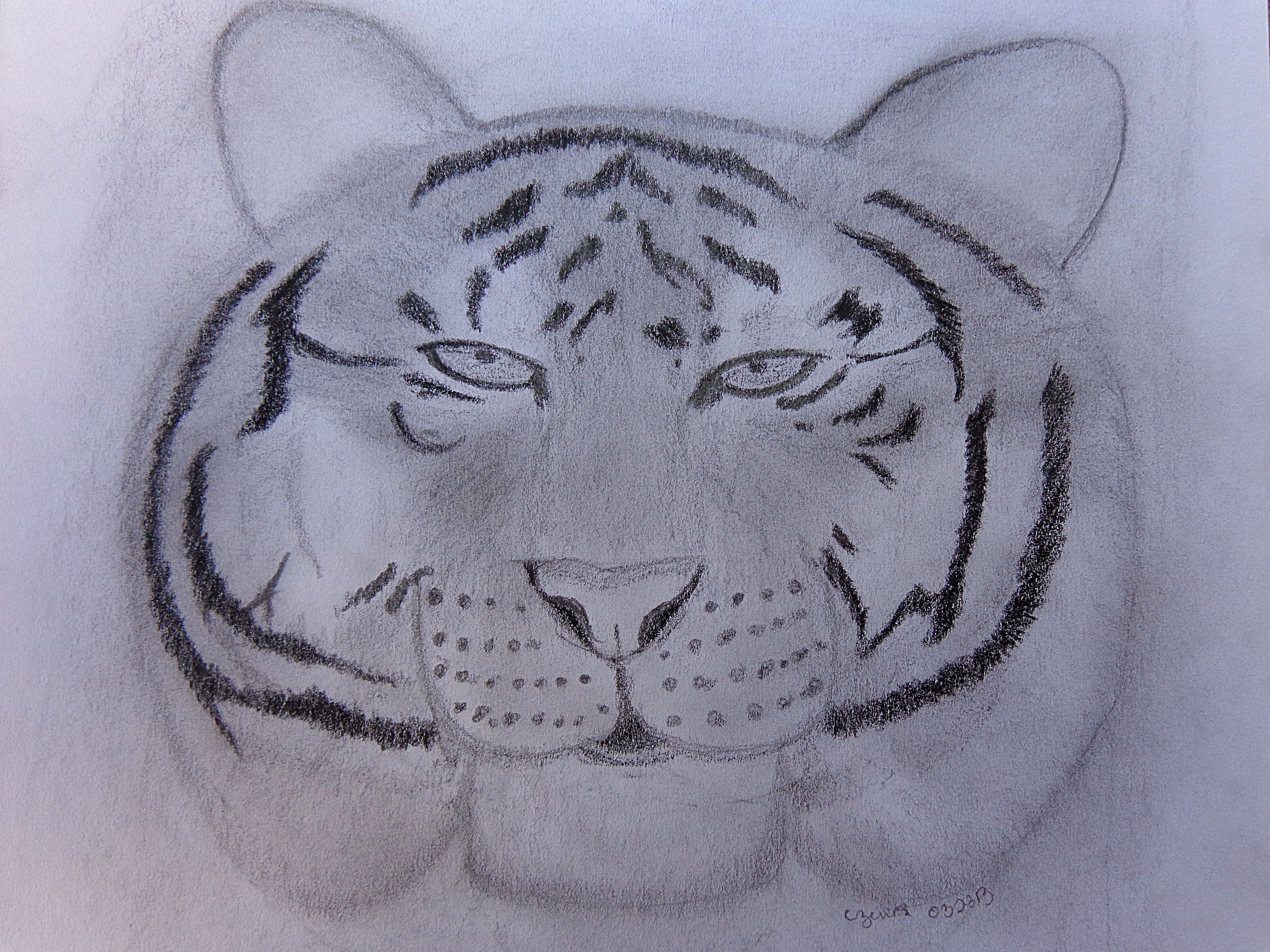 Line Drawing Of A Tiger S Face : This is day of drawing challenge i call the siopao