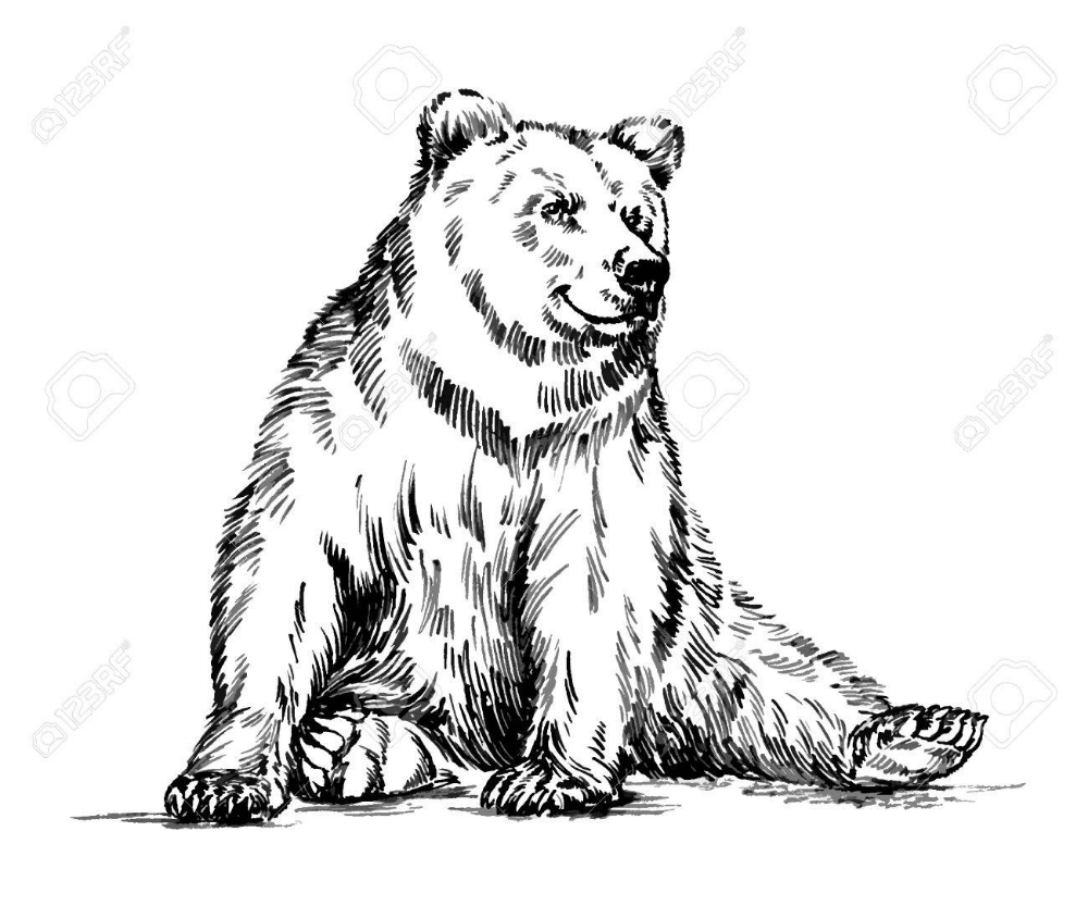 Black And White Engrave Ink Draw Isolated Vector Grizzly Bear Grizzly Bear Tattoos Grizzly Bear Drawing Cute Bear Drawings