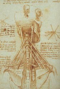 Anatomia do pescoço - (Leonardo Da Vinci)