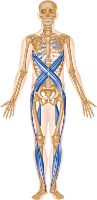 About Anatomy Trains Company History By Tom Myers 312x640 Png
