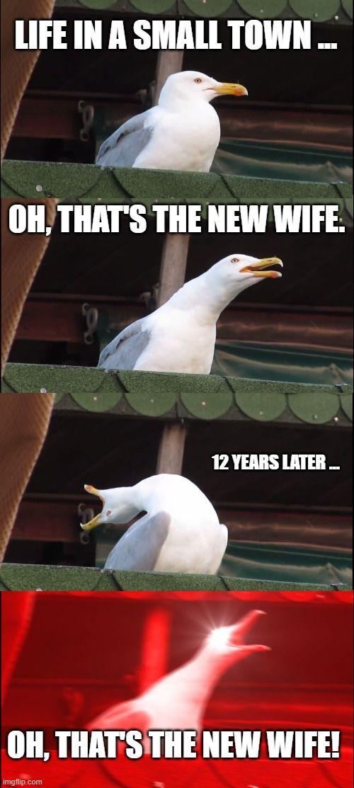 Inhaling Seagull Meme Generator - Imgflip   The greatest ...
