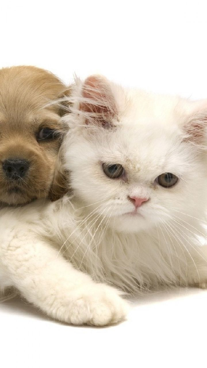 Cat Kitten Dog Puppy White Cute Cats And Dogs Kittens And Puppies Dog Friends