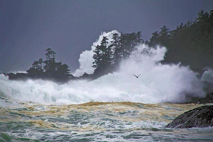 There's a little secret we like to keep in Ukee: Summer is awesome but  #StormWatching in #Ucluelet is even better...  Bring on Storm Season!  Photo submission by Jimmer Young Thanks! It's beautiful.