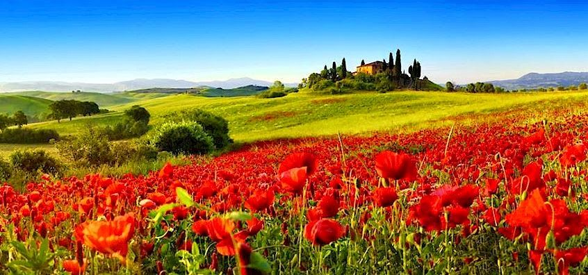 Timing for poppies in the Val d'Orcia of Tuscany when do