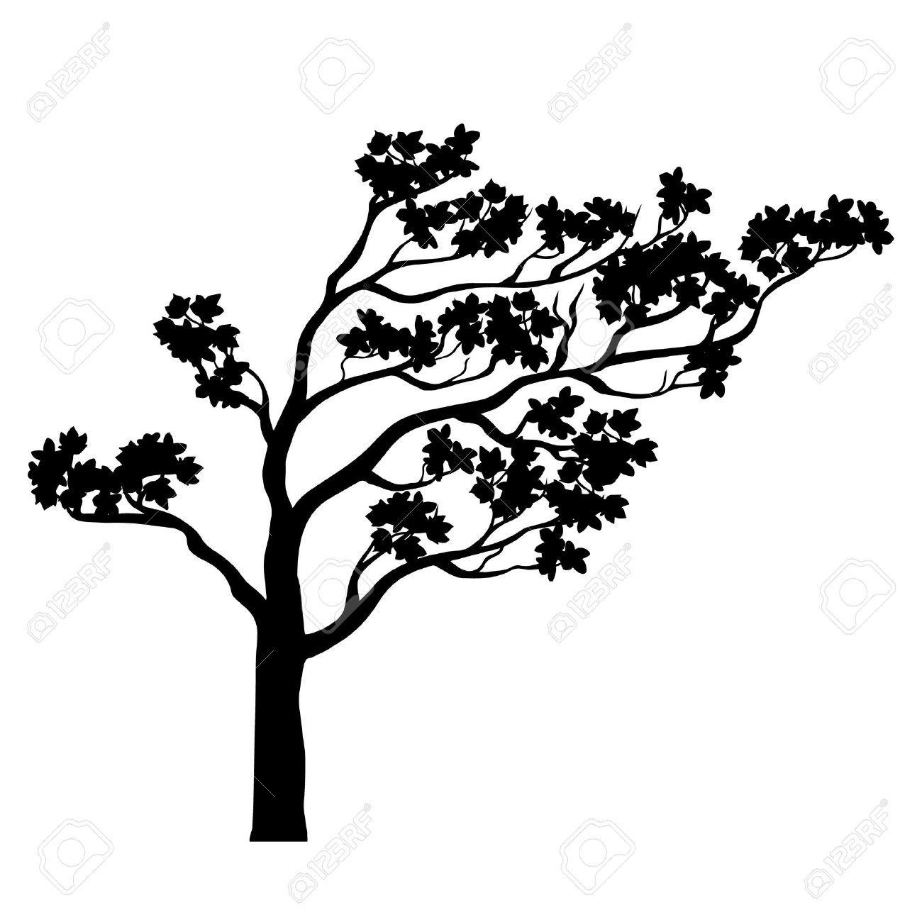 Albero Sakura Silhouette Contorno Isolato In Bianco E Nero Un