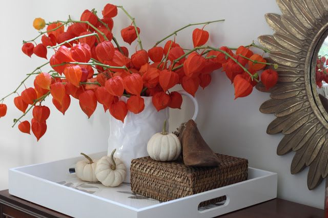Decorate with physalis (chinese lantern flowers) | Halloween ... on climbing nightshade plant, bleeding heart plant, chinese paper lanterns, abutilon plant, chinese flying lanterns, lace aloe plant, rhododendron plant, snapdragon plant, baloon flower plant, chinese money plant, chinese tomato plant, flowering maple plant, foxglove plant, chinese rain tree, bittersweet plant, lupine plant, chinese red plant, verbena plant, bird of paradise plant, chinese sky lanterns,