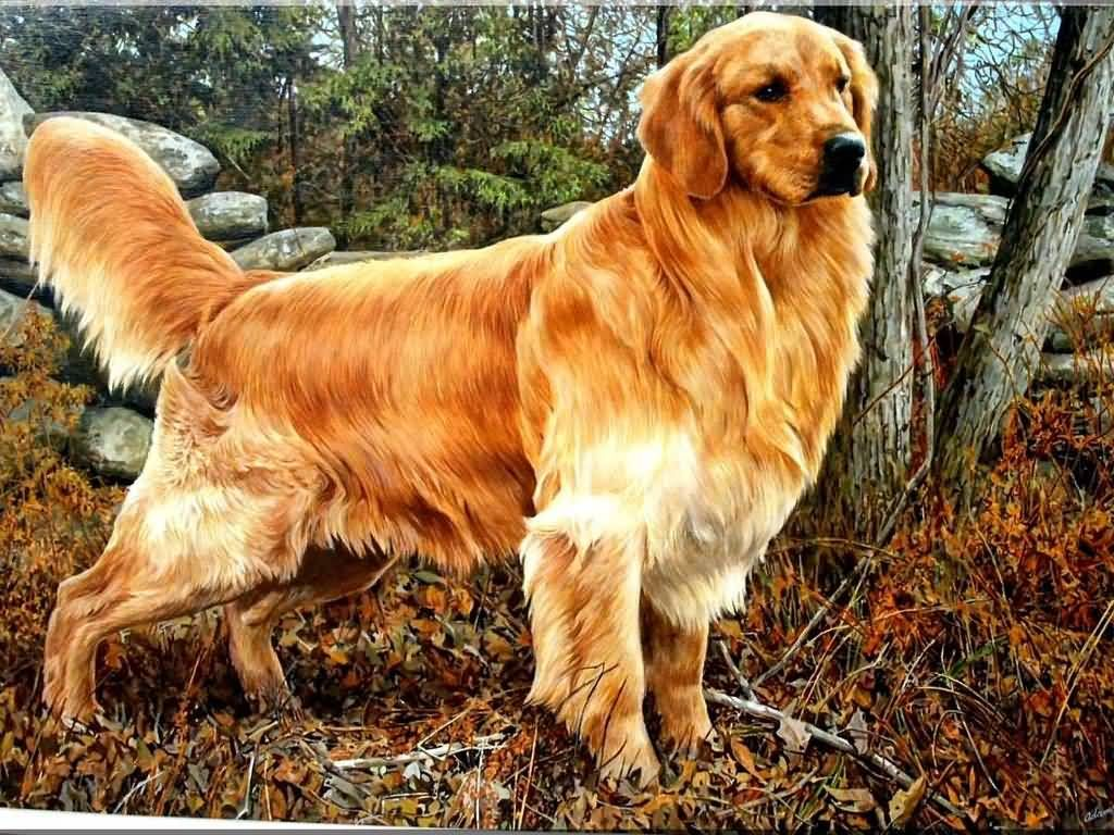 45 Most Beautiful Golden Retriever Dog Photos Golden Retriever