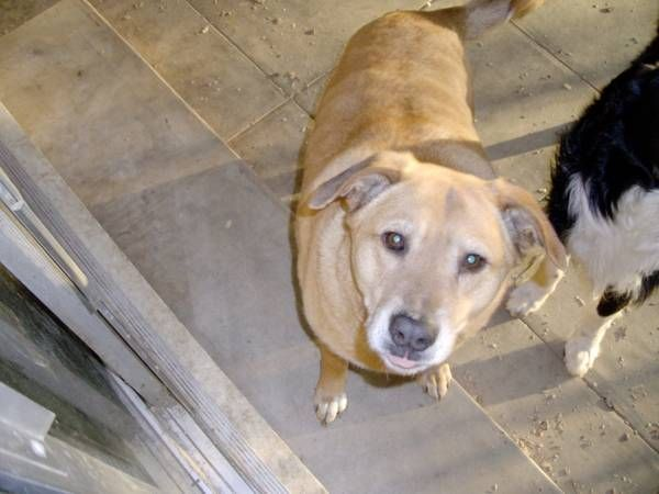Slobbers Tulsa Male Sharpei May Be With An Older Female Mix