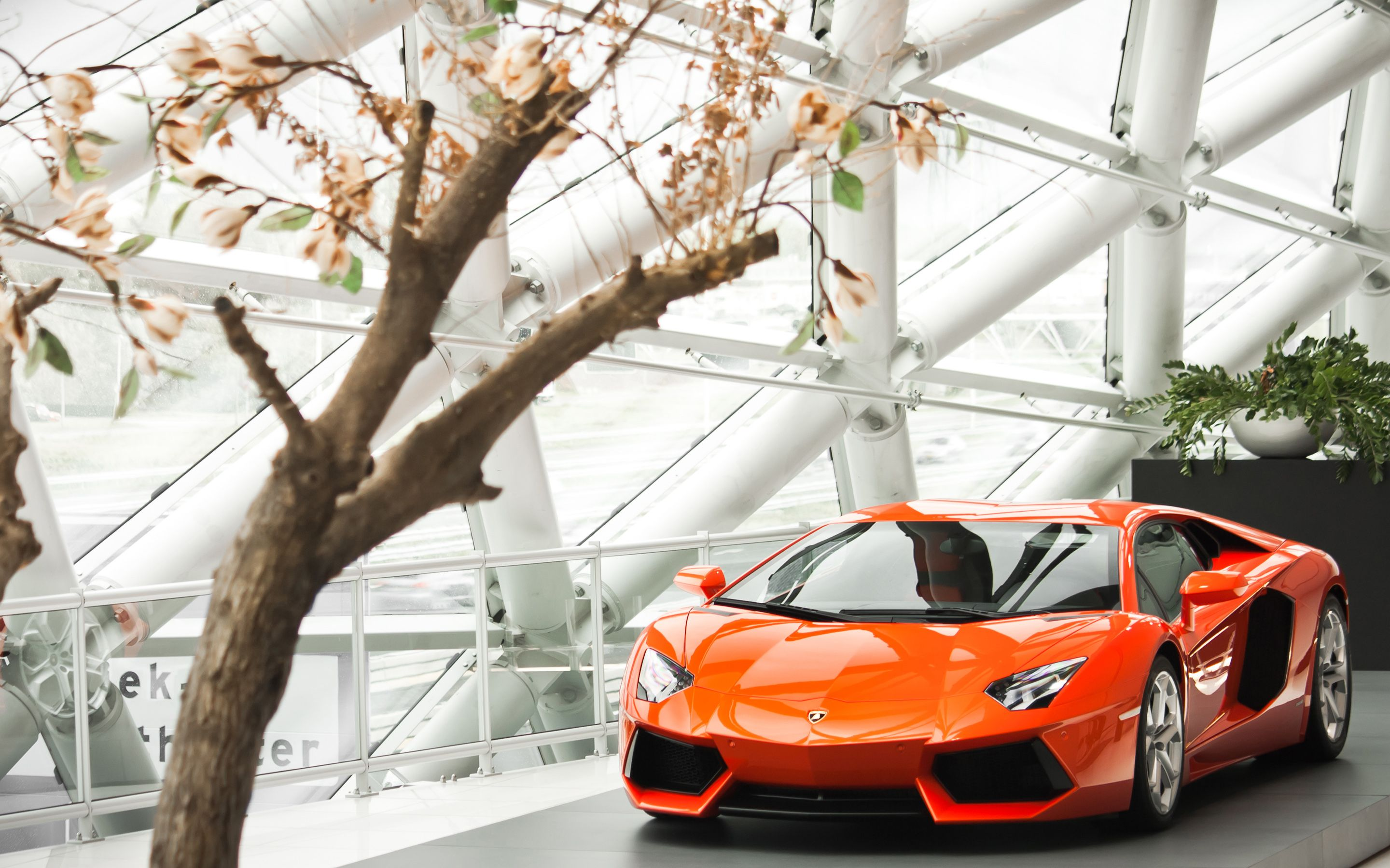 Cars like the lamborghini aventador give more information than we know what to do with. Lamborghini Aventador Wallpaper Lamborghini Aventador Wallpaper Lamborghini Aventador Lamborghini Aventador Lp700 4