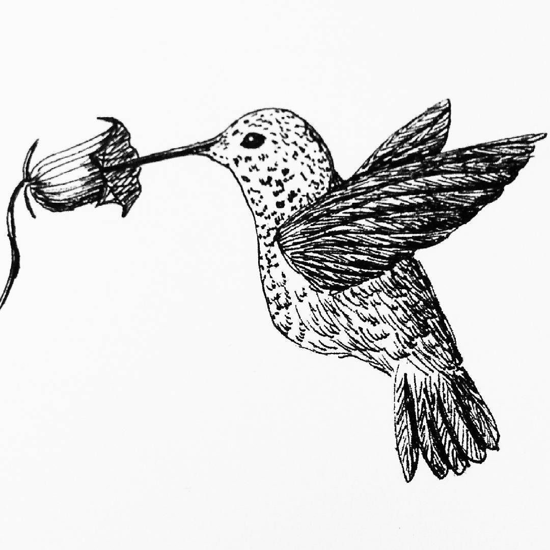 A hummingbird for my daily drawing 90 dailydrawing ink