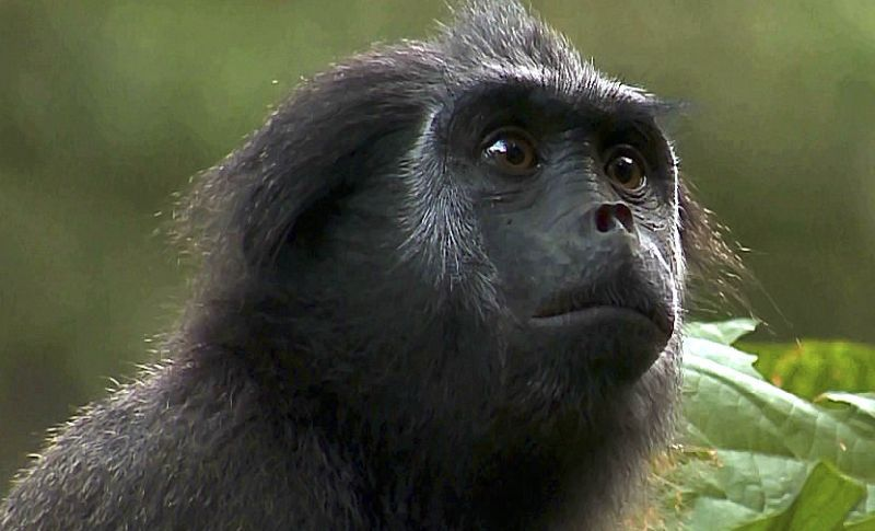 The Ape In Us With Images Primates Animals Wild Species