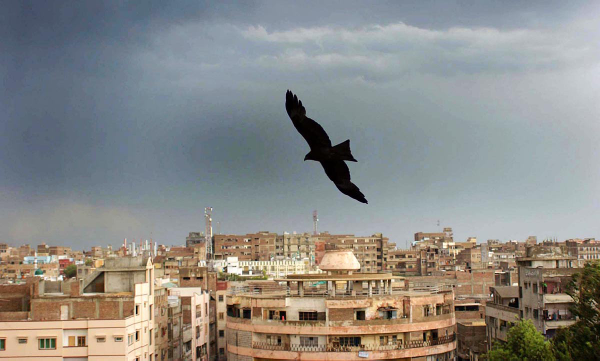 HYDERABAD: Apr12 – Eagles are flying during cloudy and showery