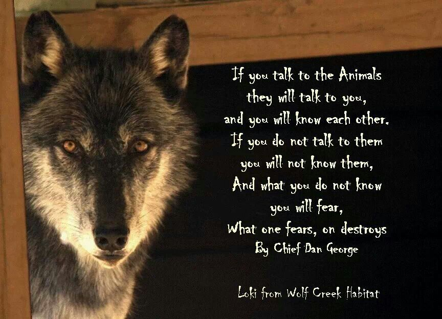 Dan Wolfe Quotes