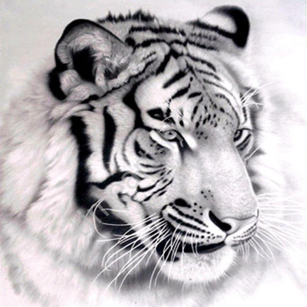 Портрет белого тигра, картина-раскраска по номерам на ...