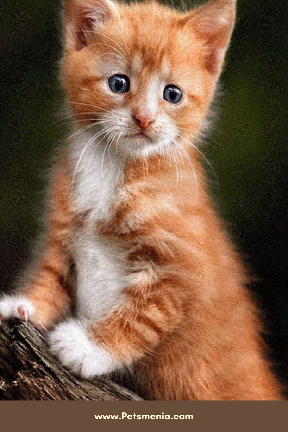 Pin On Kittens Cute Kittens For You