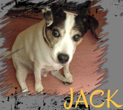 York Rspca Animal Home Jack Animals Dogs Animal House