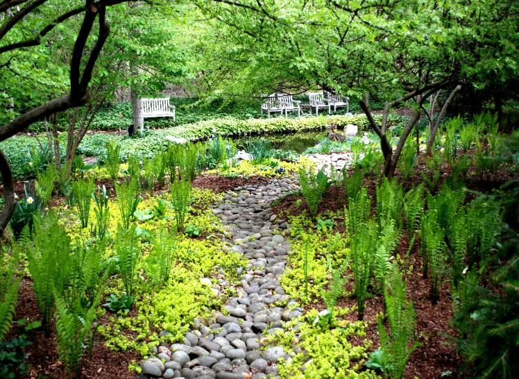 CREEPING_JENNY_CARPET_WITH_FERNS Shade garden, Garden