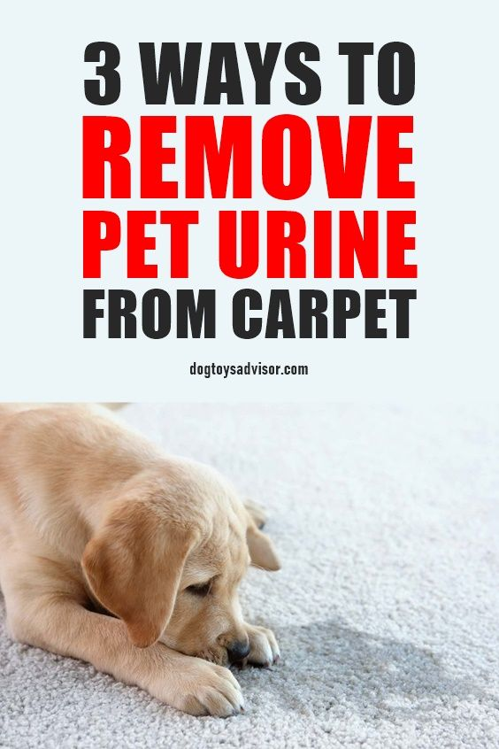 Here S How To Naturally Remove Dog Urine From The Carpet