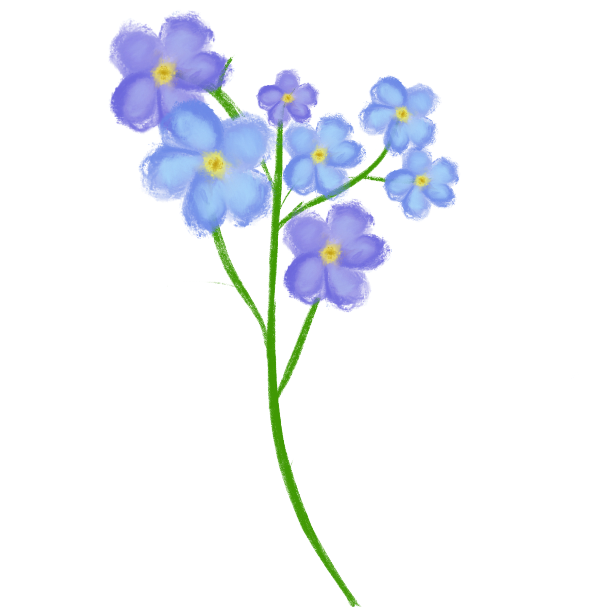 Me Not Hand Drawn Flower in 2020 How to draw