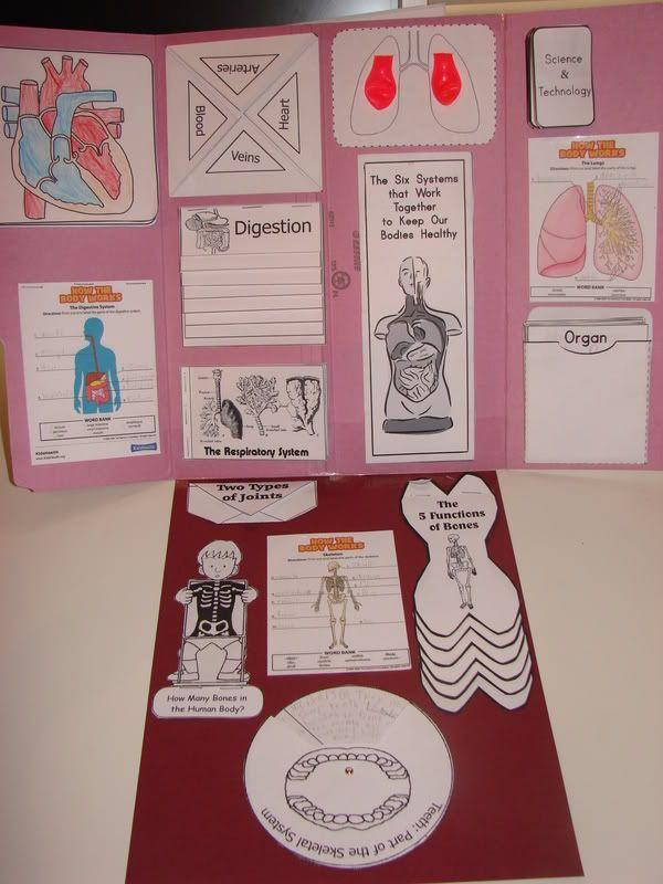Human Body Lapbook | Grundschulen, Mein körper und Körper
