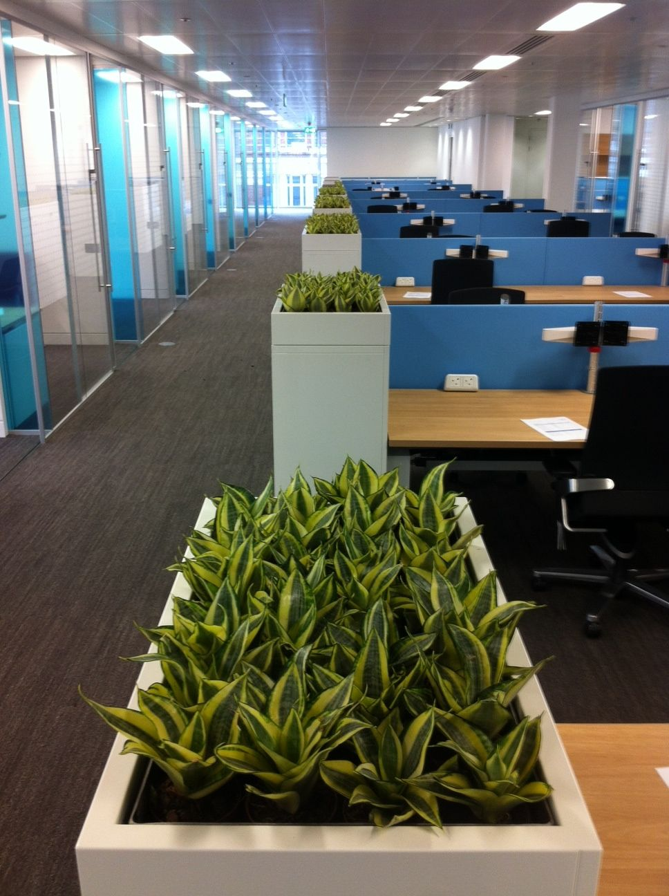 office planter. built in cabinet trough planters bring greenery through the workfloor office planter
