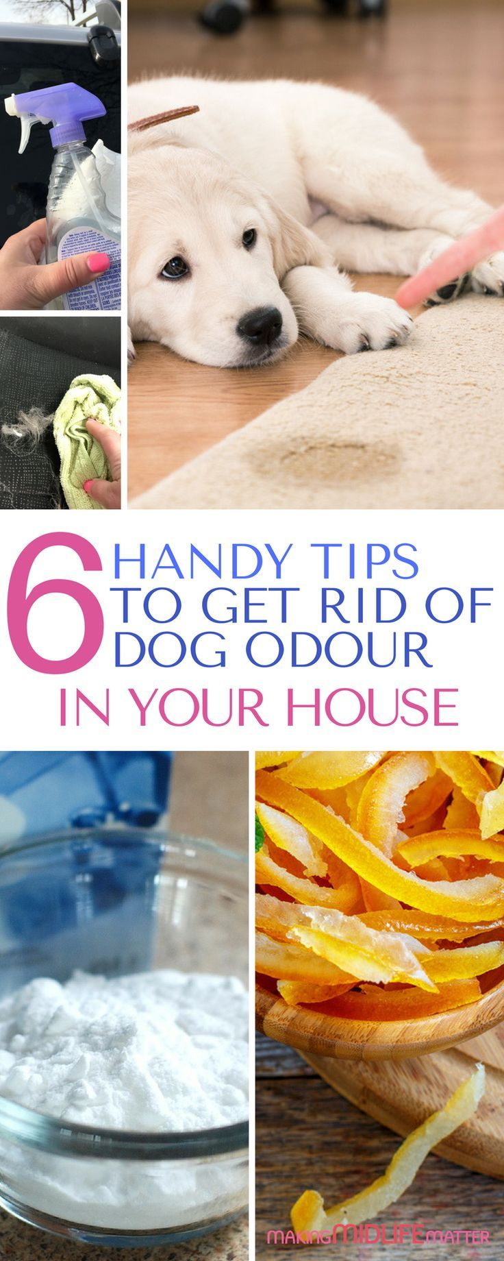 6 Handy Tips To Get Rid Of Dog Odour In Your House Homemaking