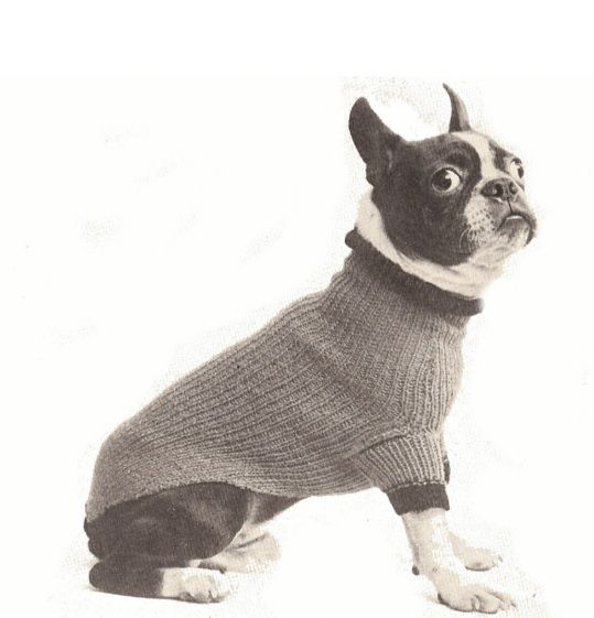 Knit A Boston Terrier Sweater A Free Knitting Pattern Gracie