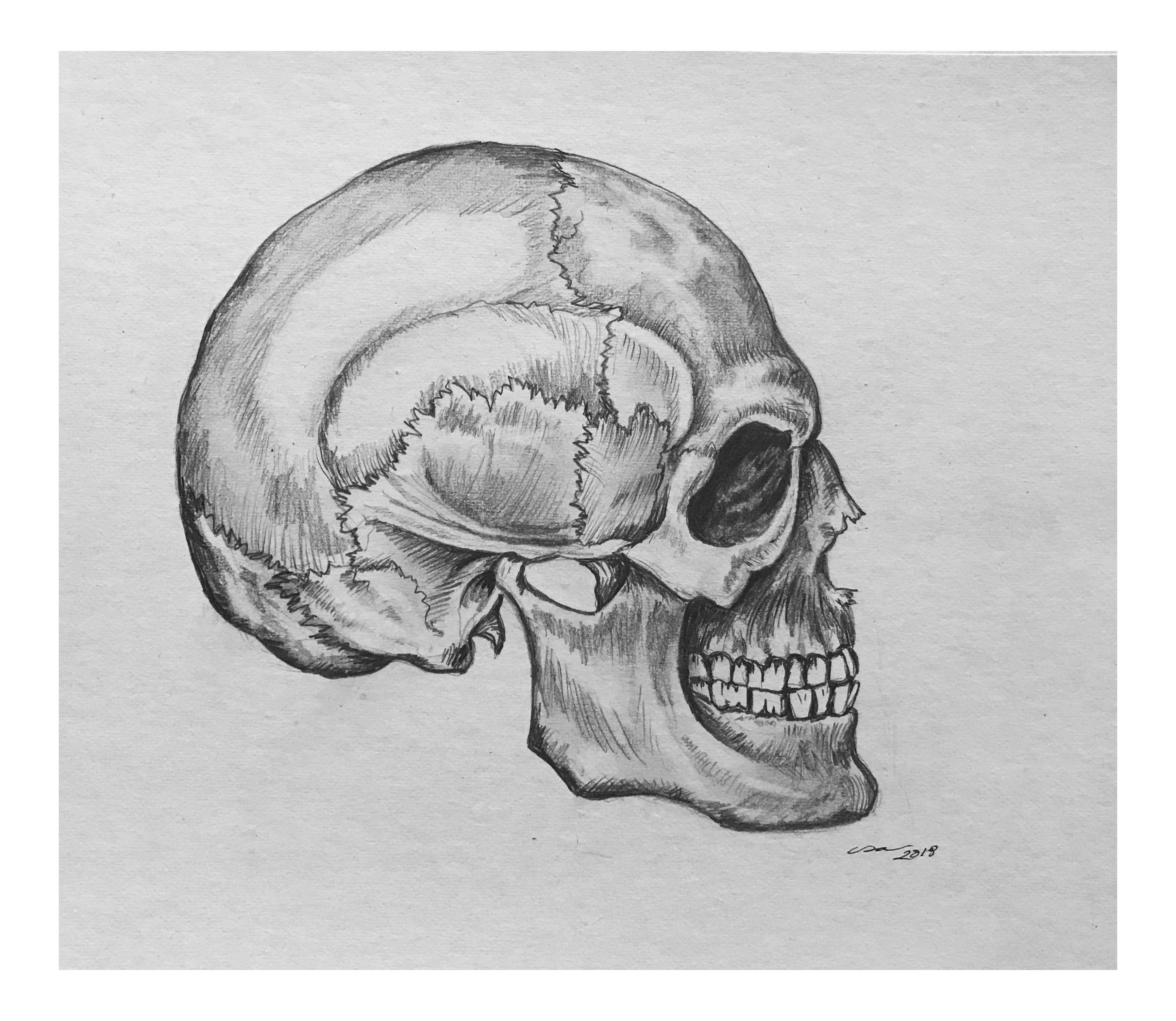 Side Skull Original Drawing On Chairish Com Skull Sketch Pencil Drawings Face Drawing