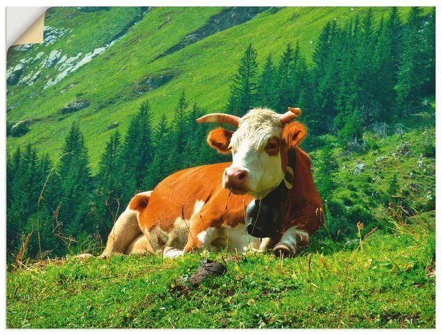 Photo of Artland Wandfolie »Kattobello: Kuh auf der schweizer Alm« online kaufen | OTTO