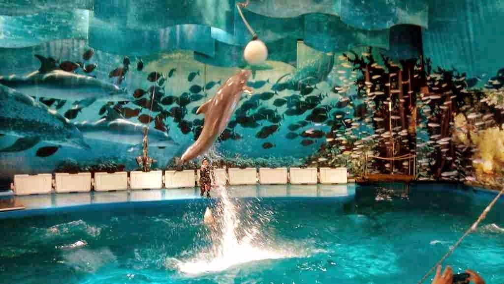 Zoo Barcelona espectáculo delfines zoo barcelona relaxing moments