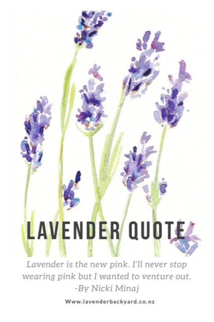 Quote About Lavender Căutare Google In 2020 Lavender Quotes Lavender Flowers Flower Quotes