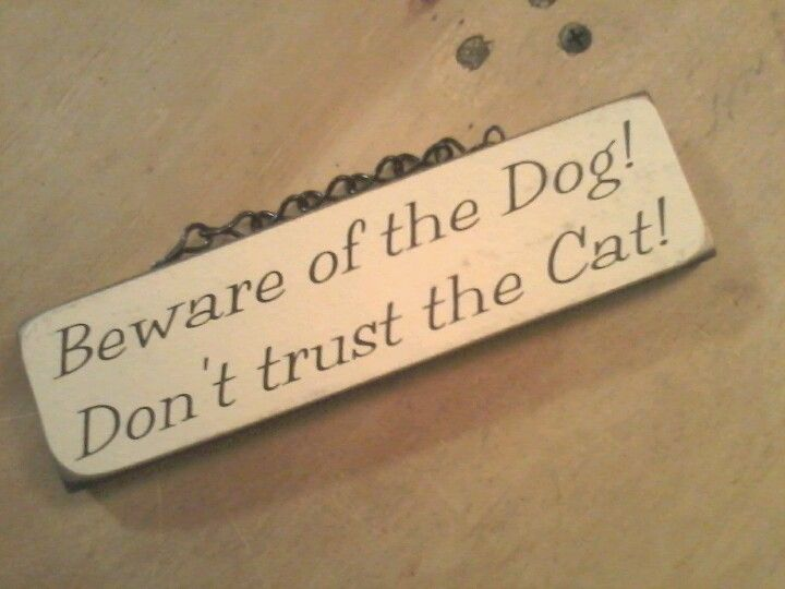 My pets...to a tee!