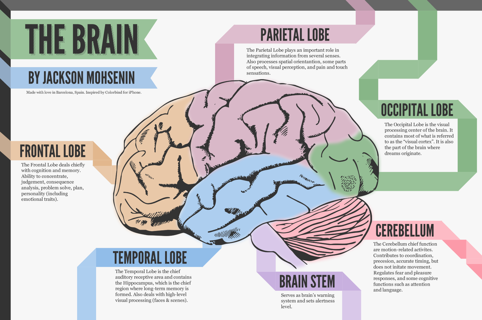 A Look At The Brain Visual Ly Brain Mapping Brain Diagram Neuropsychology