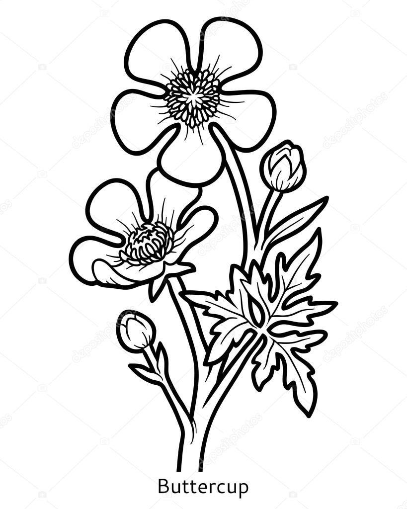 Jaskier Polny Kolorowanka Szukaj W Google Coloring Books Flowers Floral Illustrations