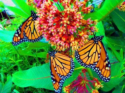 Pretty Most Beautiful Butterfly Butterfly Wallpaper Beautiful Butterflies
