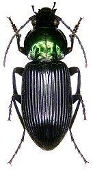 Pin Von Bruno Gunterswiler Auf Insekten Insekten Spinne