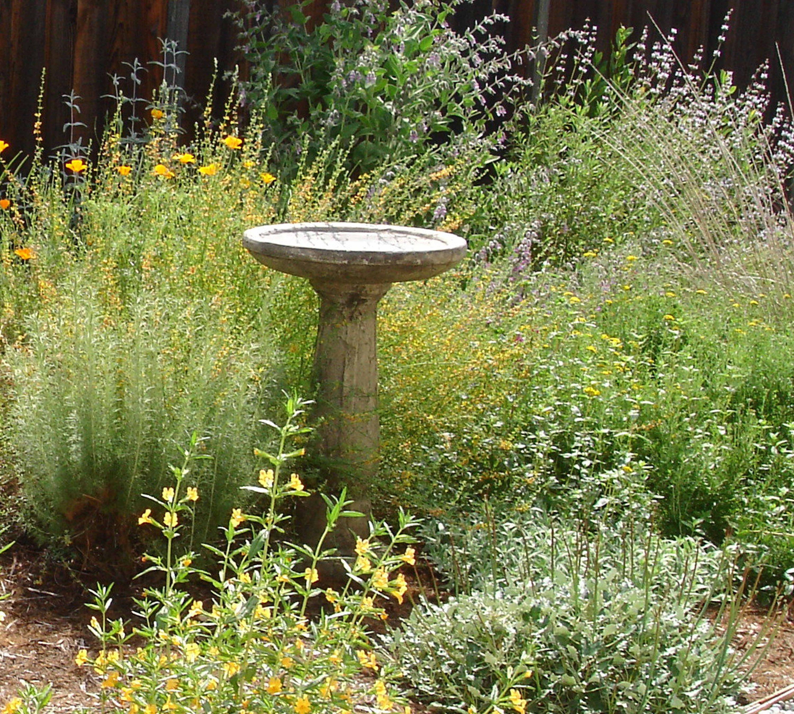 California native plant garden including sticky monkey for Native plant garden designs