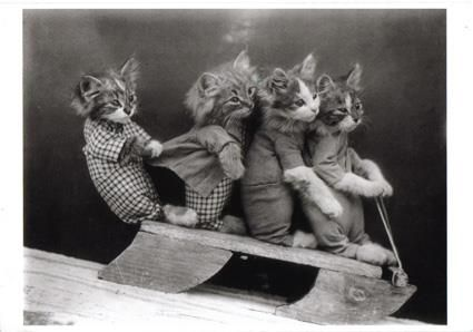 The Caturday Bobsled Team