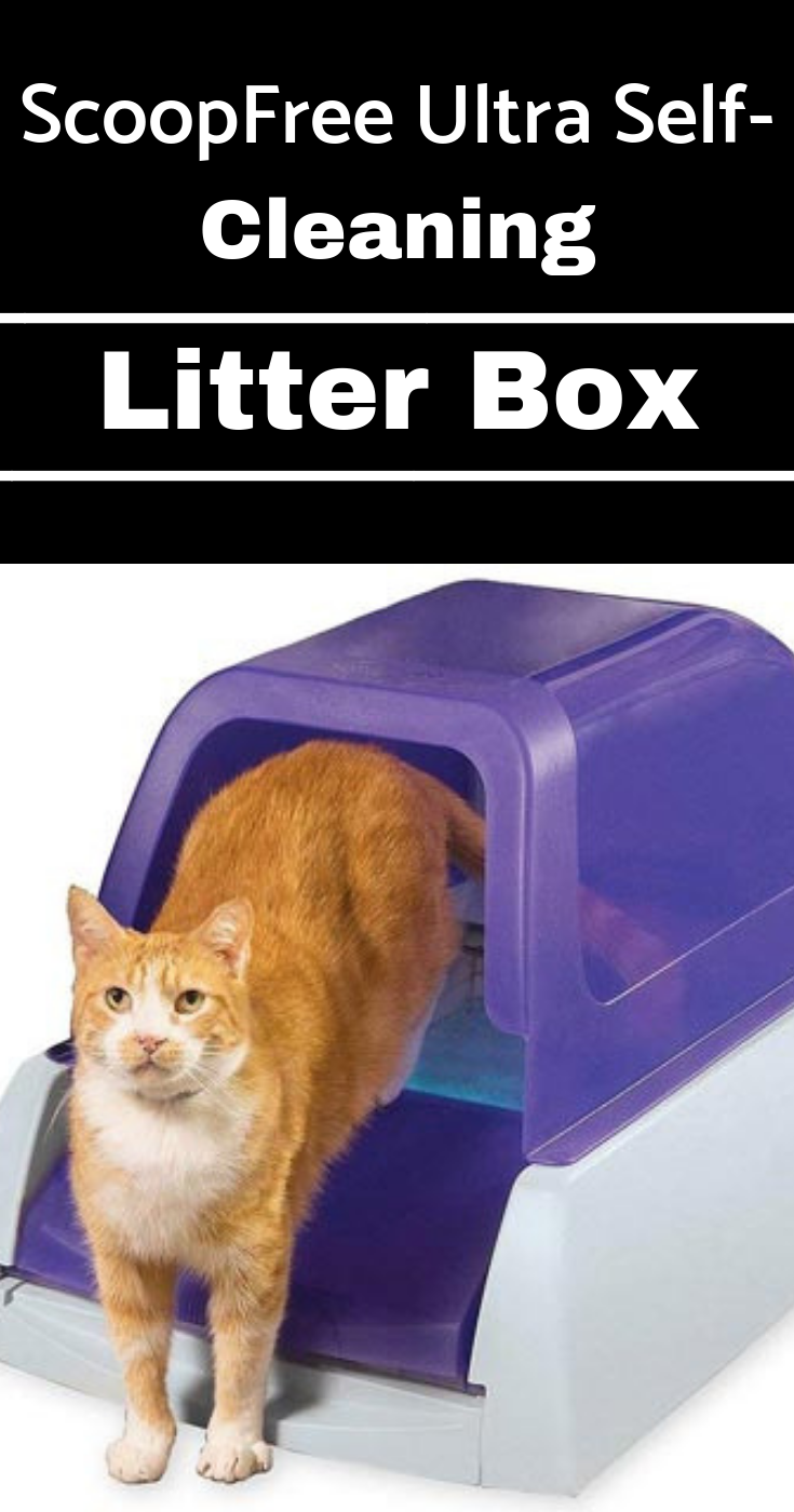 5 Of The Best Self Cleaning Cat Litter Boxes Self Cleaning Litter Box Litter Box Litter