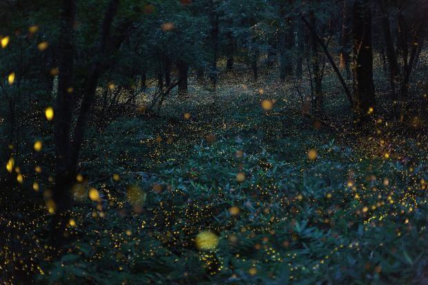 Photographer Captures Magical Nighttime Landscapes Japanese Nature Nature Photography Japanese Landscape