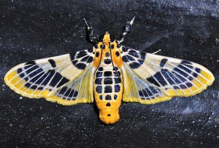 Pin Von C P Auf Insektenarten Und Spinnentiere Tiere Insekten Schmetterling